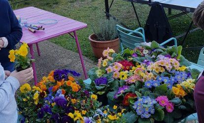 Agapei - flowers- RAGT Jardin et Maison Gaillac (2)